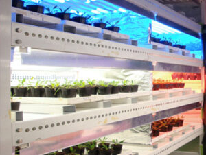 千葉大学 植物工場